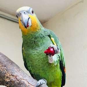 Dimanche Vert : que mangent nos animaux ? (atelier)