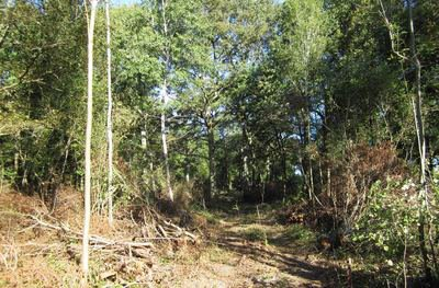 image de couverture de En forêt de Rougeau