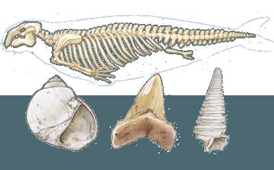 image de couverture de Les fossiles témoignent