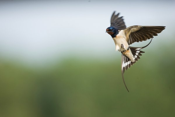 image de couverture de Le printemps des oiseaux