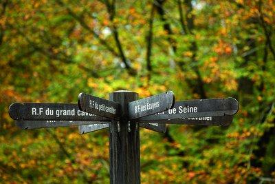 Forêt de Rougeau - Nandy