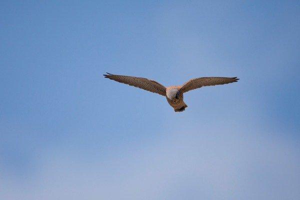 image de couverture de Les oiseaux essonniens