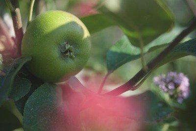 image de couverture de Préparez vos récoltes !