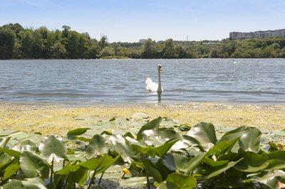 lacs-de-grigny-l-enclave-verte-image-9