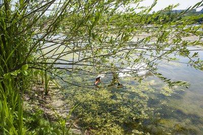 lacs-de-grigny-l-enclave-verte-image-7