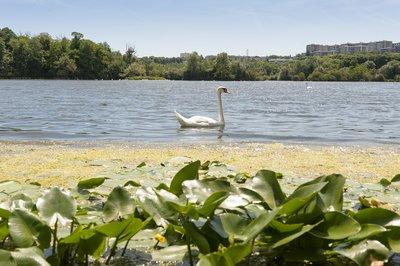 lacs-de-grigny-l-enclave-verte-image-12
