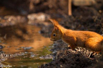 image de couverture de Un gîte pour les écureuils