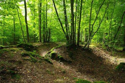 image de couverture de Fête de la forêt