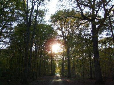 image de couverture de Visite de la Forêt de Sénart