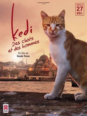 image de couverture de Kedi, des chats et des hommes