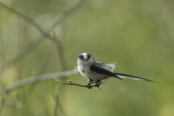 image de couverture de Ornithologue en herbe