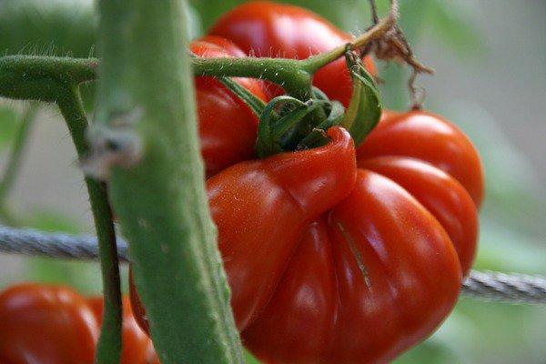 image de couverture de Quelles alternatives aux pesticides ?