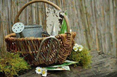 garden-gardening-1290908_960_720.jpg