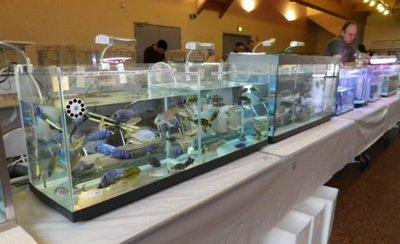 Bourse poissons 03.JPG