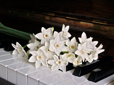 Canva - White Orchid on Brown Wooden Piano.jpg