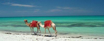 tunisie-624x250.jpg