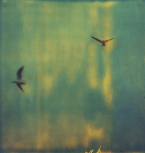 Seagulls (@) Fernanda Montoro.jpg