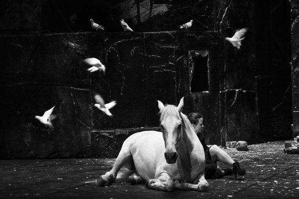 TCHAP_CAM_PIGEONS-photo_François_Passerini.jpg