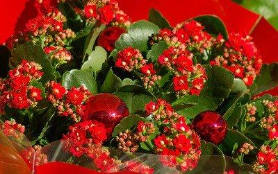 flowers-1067261_640.jpg