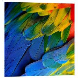Illustration Oiseaux des Iles © DR.JPG
