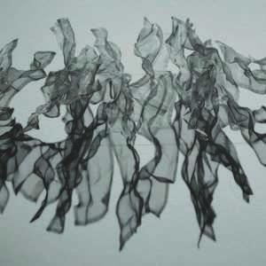 Exposition Ana Lima-Netto