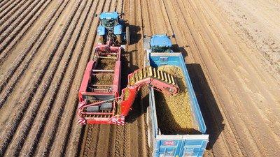 Recolte des pommes de terre 2021.jpg